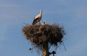 protección avifauna