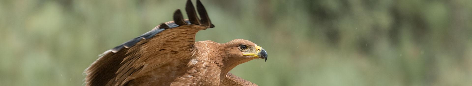 protección para avifauna